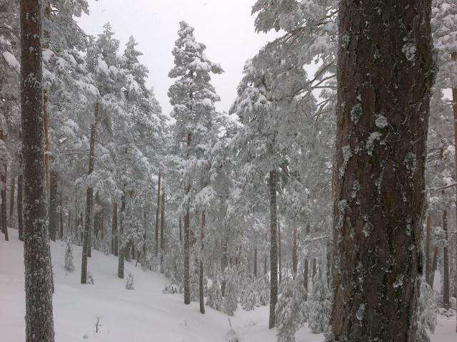 El bosque del Telégrafo, in the forest North of Siete Picos.